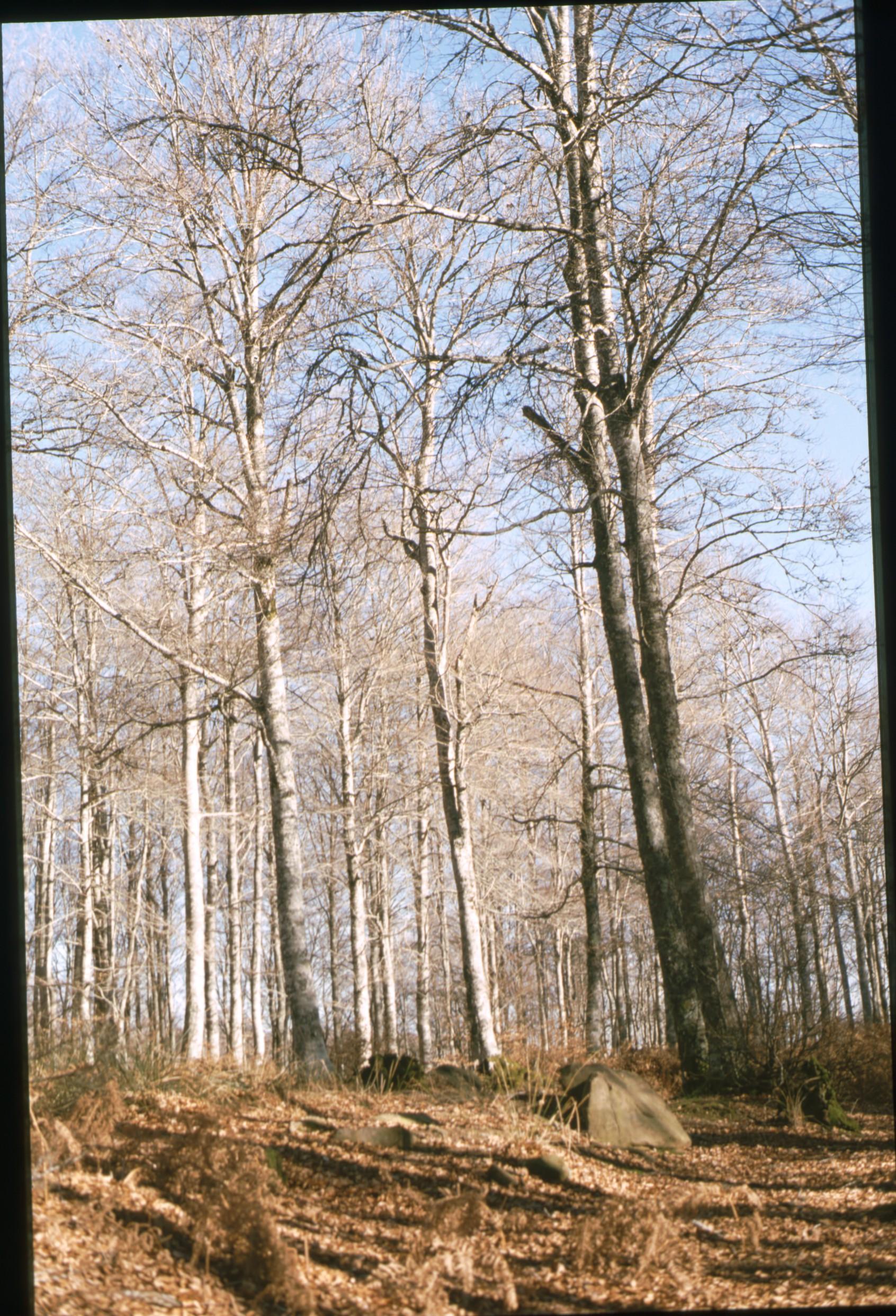 bosque_aritzu.jpg