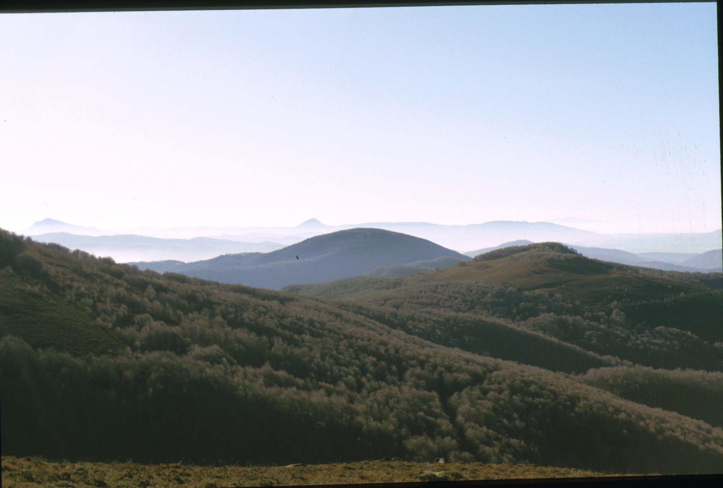 bosque_aritzu_3.jpg