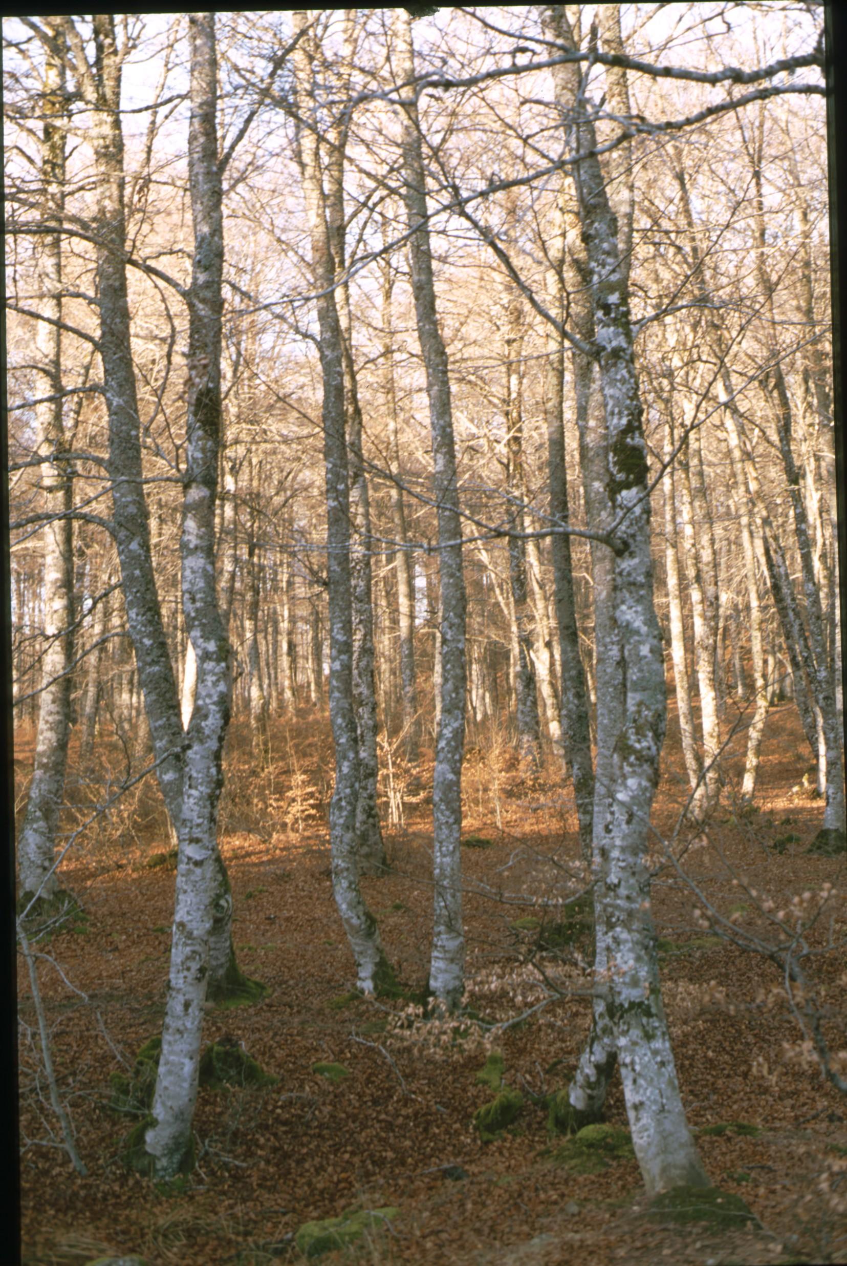 bosque_aritzu_6.jpg