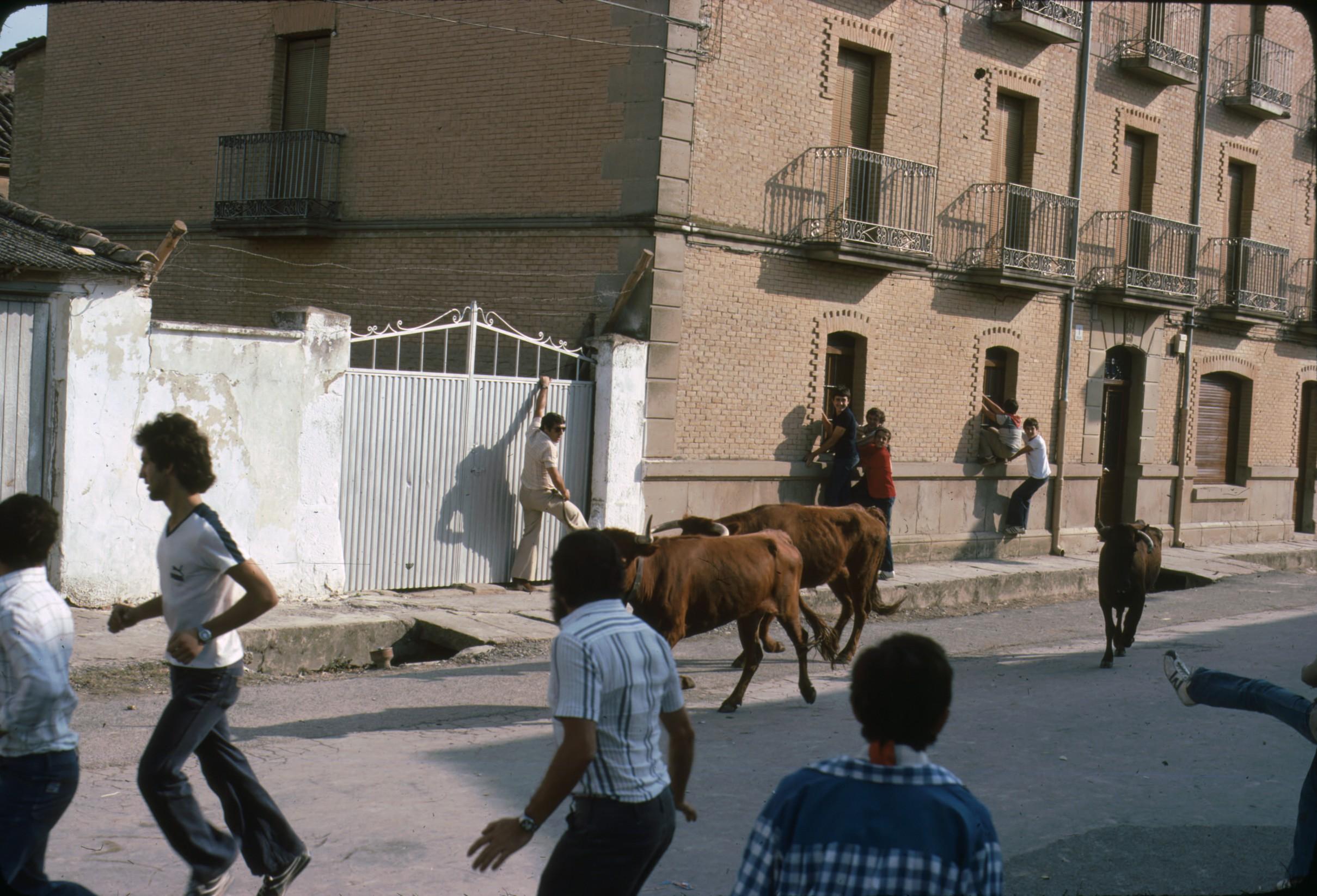 vacas_caparroso_3.jpg