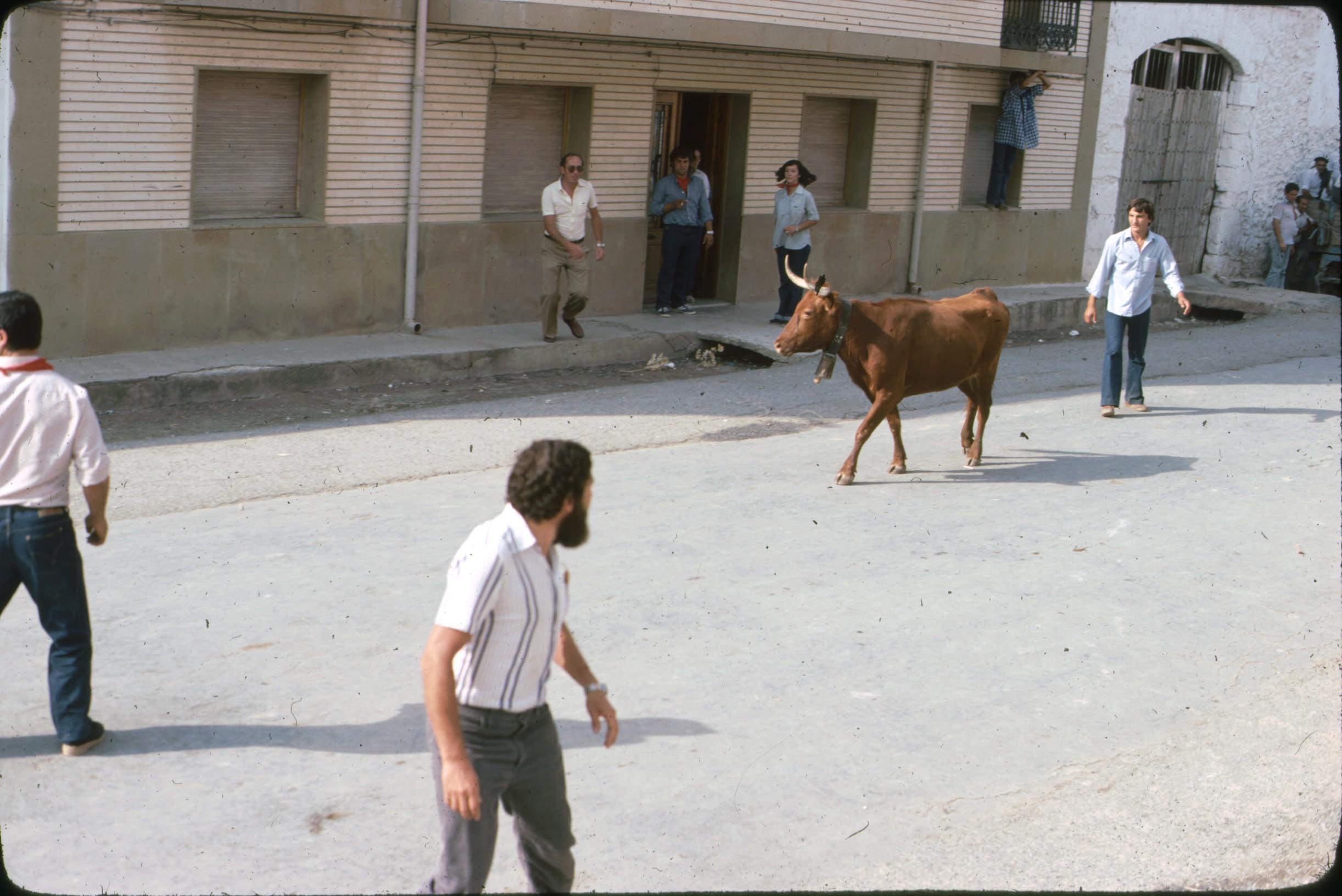 vacas_caparroso_4.jpg